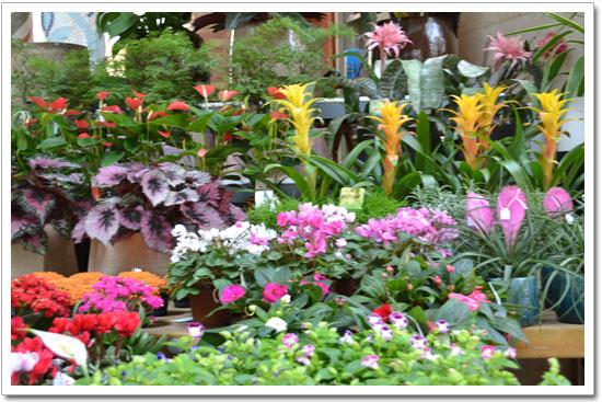 flores mercado de colón